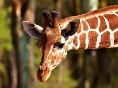 Žirafa - EFI ApartHotel